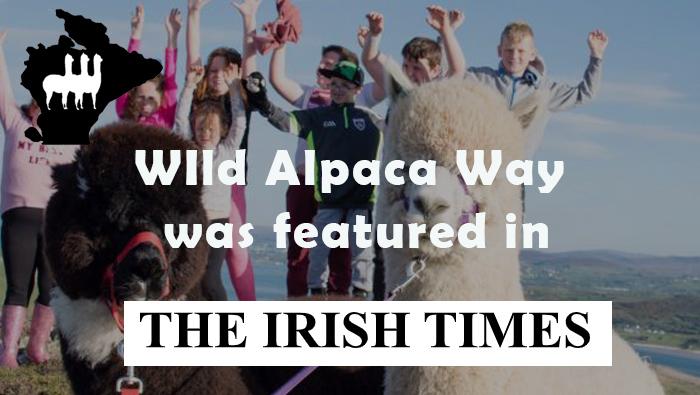 Wild Alpaca Way Irish Times Article