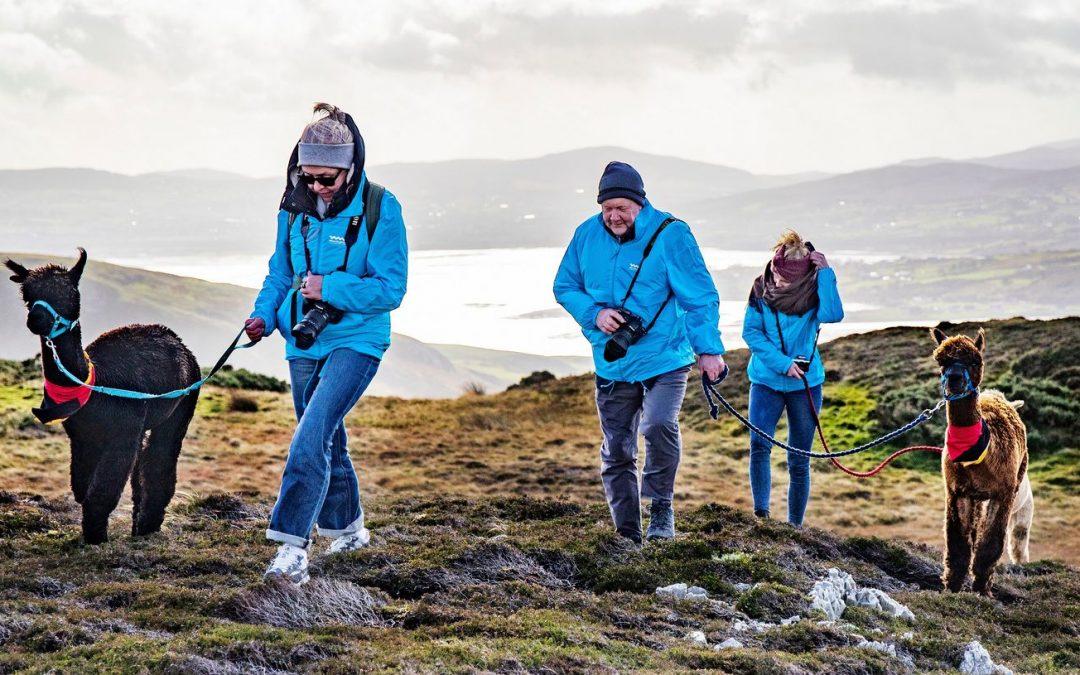 German tourism journalists on an Alpaca trek